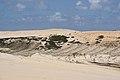 Sand buggying (8227133494).jpg
