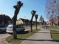 Savieckaja street in Ivacevičy.jpg