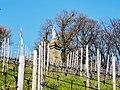 Schengen, Wintrange. Saint Donatus statue (106).jpg