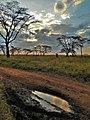 Serengeti 35 (14513979319).jpg