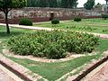 Shalamar Garden July 14 2005-Arrangement of flowering plants.jpg