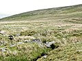 Sheep grazing at the head of Cwm Ffrydlas - geograph.org.uk - 430918.jpg