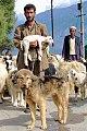 Shepherd Dog.jpg
