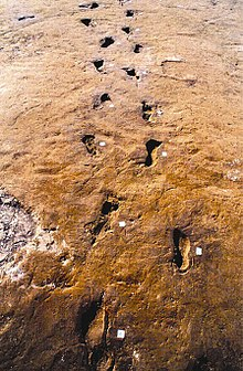 Impronte di fuggitivi nelle ceneri dell'eruzione detta delle «pomici di Avellino» (datata tra il 1880 e il 1680 a.C.)