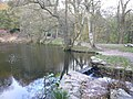 Shining Cliff Woods - Pool and Footpath - geograph.org.uk - 1188746.jpg