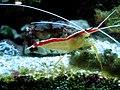 Shrimp (3).jpg