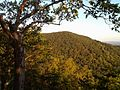 Signal Knob from Buzzard Rock trail - panoramio.jpg