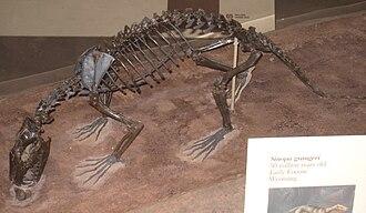 Sinopa - Sinopa grangeri skeleton