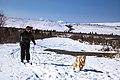 Skijouring at Mountain Vista (8640819645).jpg