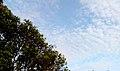 Sky View at Madhurawada over a Tree.jpg