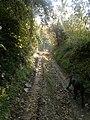 Slankamenački Vinogradi, Serbia - panoramio (14).jpg