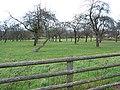 Small orchard near Veldt House - geograph.org.uk - 626077.jpg