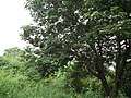 Snap from Bannerghatta National Park Bangalore 8537.JPG
