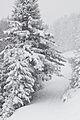 Snowstorm in Tyrol - 02.jpg