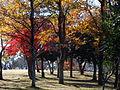 Sodegaura park-Chiba 袖ヶ浦公園-DSCF7198.JPG