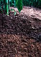 Soil profile in Iowa.jpg