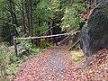 Sokol, jihozápadní úbočí, těžba dřeva u modré značky, páska.jpg