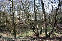 Sound Heath SSSI.jpg