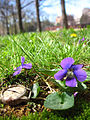 Spring-Time (2421634533).jpg