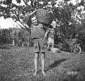 """Srečko iz Imenja nosi grozdje v """"dzeju"""" na rami 1953.jpg"""