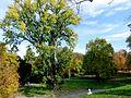 Stadtpark L1500412.jpg