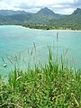 Starr-050419-0434-Digitaria insularis-habit-Mokolii-Oahu (24719223686).jpg