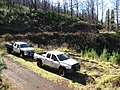 Starr-101201-9621-Sequoia sempervirens-habit post fire with State trucks-Polipoli-Maui (24939260342).jpg