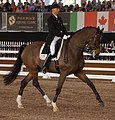 Steffen Peters - Legolas - CDI 5 Wellington 2013.jpg