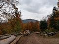 Steige-Forêt d'automne (4).jpg