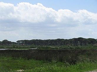 Araxos - Image: Strofilia Forest and lagoon