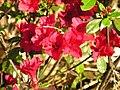 Strybing Arboretum - Flower.JPG
