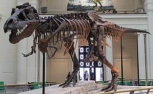 Sue (dinosaur)