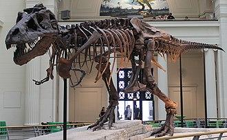Sue (dinosaur) - Image: Sues skeleton