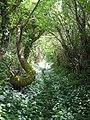 Summer Way (Maes yr Haf) May 2006 - geograph.org.uk - 844245.jpg