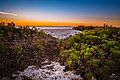 Sunrise and Foliage at Spiaggia delle Saline Beach, Stintino (Sardinia, Italy) (24039252402).jpg