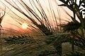 Sunset (260912265).jpeg