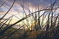 Sunset view through grass (Unsplash).jpg