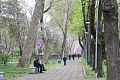 Tashkent park3.jpg