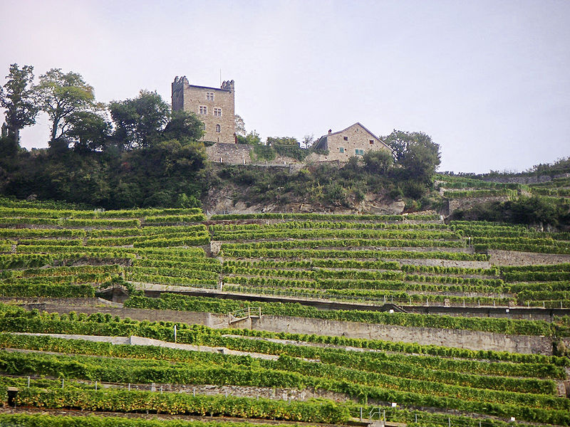 Ficheiro:Terraced vineyards in Switzerland.jpg