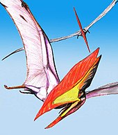 Colour picture of two T. sethi in flight