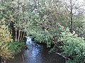 The Blackwater River - geograph.org.uk - 295916.jpg