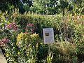 The Forks.Prairie Garden 2014.2.JPG
