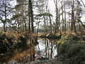 The Latchmore Brook in the Alderhill Inclosure, New Forest - geograph.org.uk - 56835.jpg