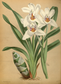 The Orchid Album-01-0077-0025.png