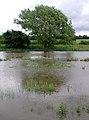 The River Hull, Eske - geograph.org.uk - 470035.jpg