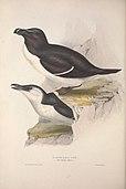 The birds of Europe (1837) (14770558423).jpg
