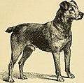 Image Result For Patriot Dog Training