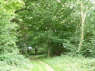 Thorpe Morieux Woods