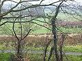 Through the Woods - geograph.org.uk - 363419.jpg