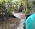 Through the trees - geograph.org.uk - 1708261.jpg
